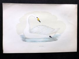 Morris 1897 Antique Hand Col Bird Print. Hooper Swan